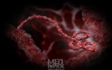5 смертельных инфекций