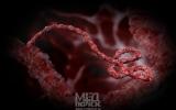 5 смертельных инфекций- кто уносит больше всего человеческих жизней?
